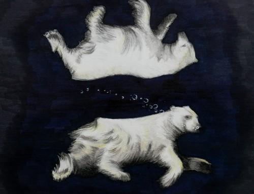 #eiskinder: Paul Nicklen (gezeichnet)
